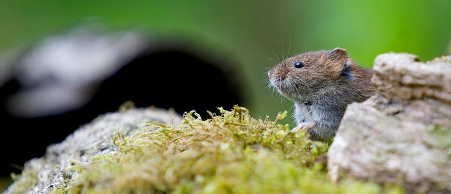 Eliminar ratas y ratones