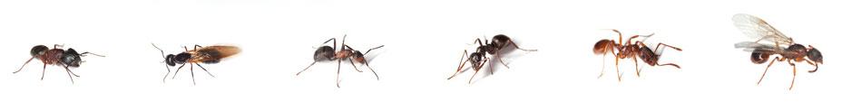 control de toda clase de hormigas