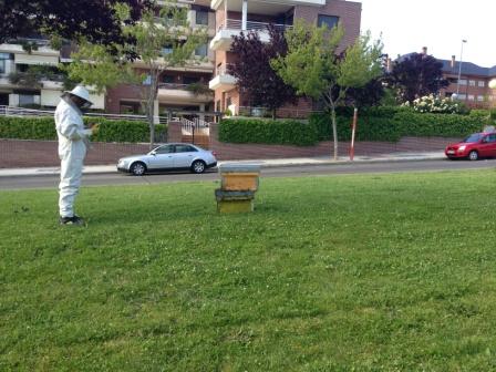 C mo ahuyentar moscas mosquitos y avispas con control de - Como ahuyentar avispas ...