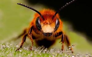 Al percatarte de que esta plaga está invadiendo tu hogar la mejor decisión es contactar con Ant Control de Plagas para eliminarlas de inmediato