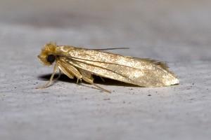 Algunas especies de estos insectos se aprovechan de los alimentos orgánicos o se alimentan tras una reacción química de la luz