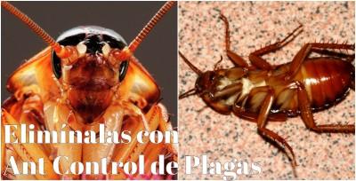 control de cucarachas