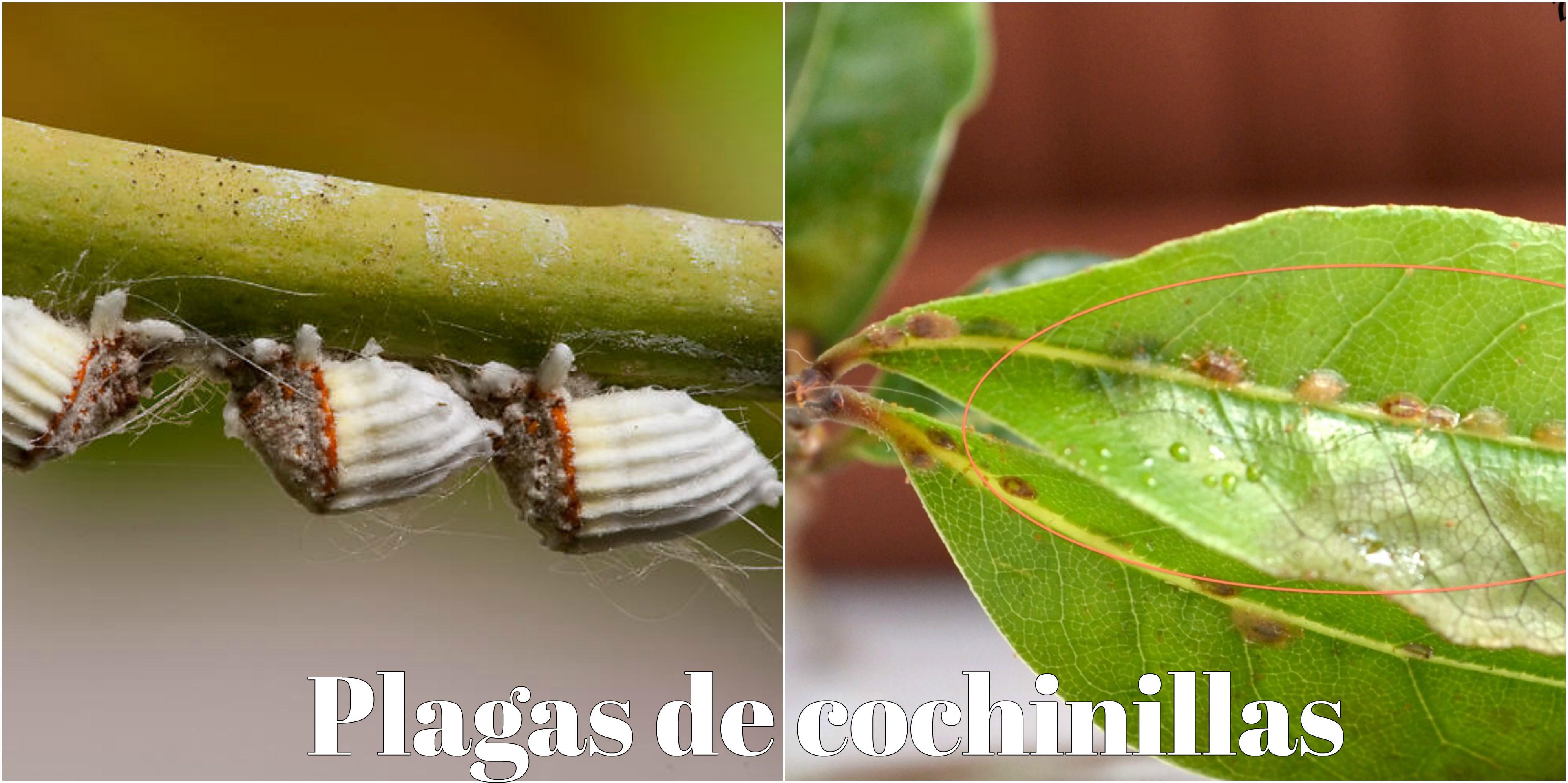 Conozca las 3 plagas m s comunes en jardines y elim nelas for Control de plagas badajoz