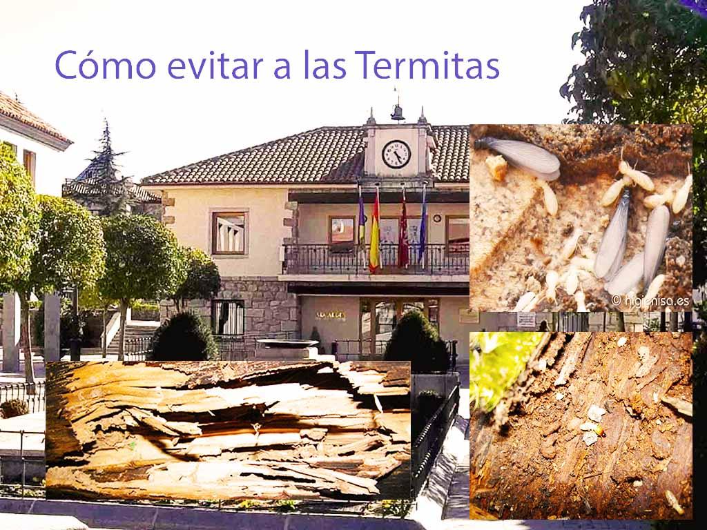 Como evitar las termitas