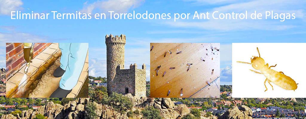 Eliminar termitas en Torrelodones por AntControl de Plagas