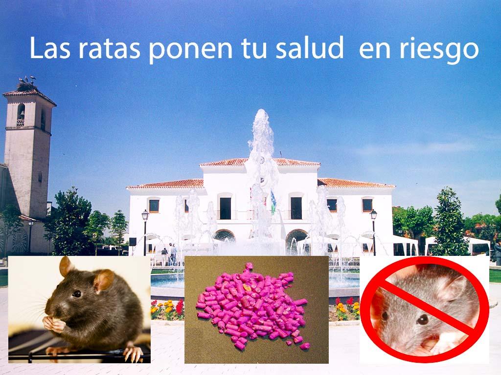 Las ratas ponen en riesgo tu salud