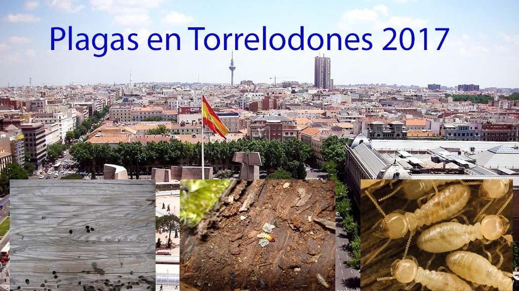 Plagas en Torrelodones 2017