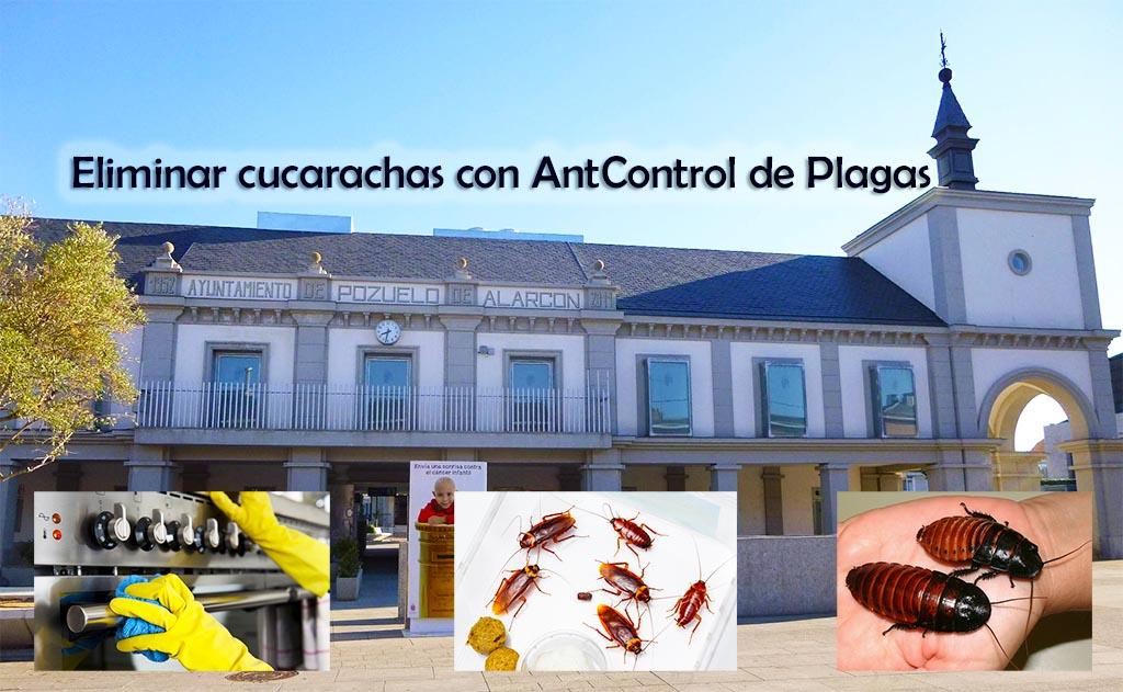 eliminar cucarachas con Ant Control de plagas