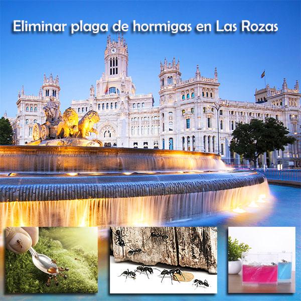 Eliminar plaga de hormigas en Las Rozas