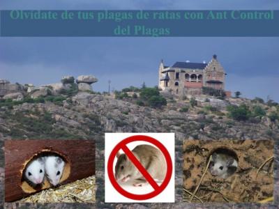 Elimina ya la plaga de ratas en tu hogar con el servicios de control de plagas en Torrelodones
