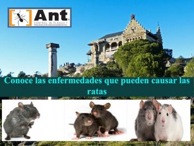 Conoce lo preligrosas que pueden ser las ratas y las enfermedades que estas pueden llegar a causar