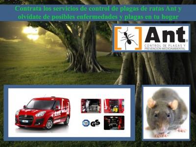 Contrata los servicios de control de plagas en Torrelodones y olvídate de las plagas indeseadas