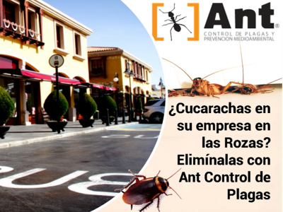 ¿Cucarachas en su empresa en las Rozas? Elimínalas con Ant Control de Plagas