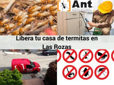 Contra Ant Control de Plagas en Las Rozas