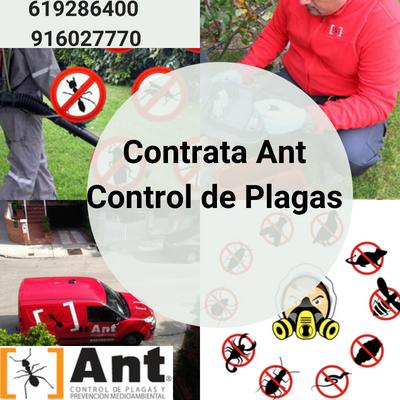 Contrata Ant Control de Plagas