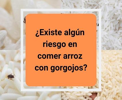 ¿Existe algún riesgo en comer arroz con gorgojos?