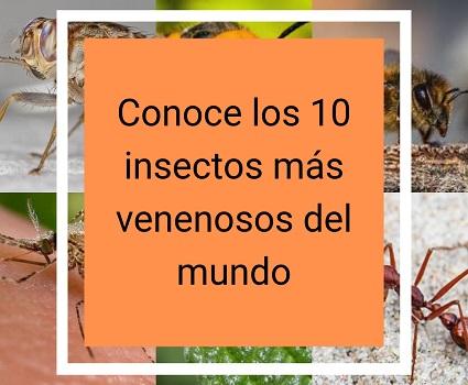 Conoce los 10 insectos más venenosos del mundo