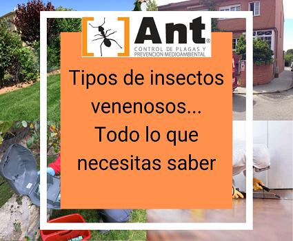 Tipos de insectos venenosos... Todo lo que necesitas saber