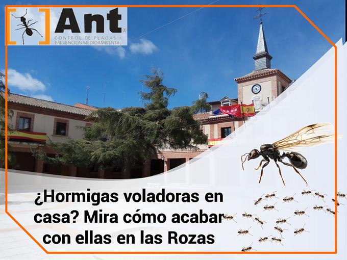 ¿Hormigas voladoras en casa? Mira cómo acabar con ellas en las Rozas