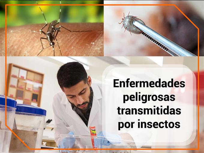 Enfermedades peligrosas transmitidas por insectos