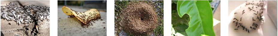 control de hormigas en el hogar
