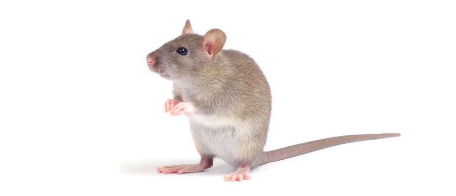 control de raton comun