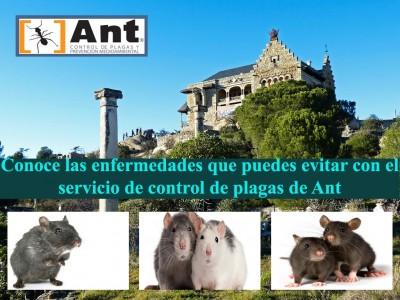 Conoce las enfermedades que puedes evitar con el control de plagas Ant