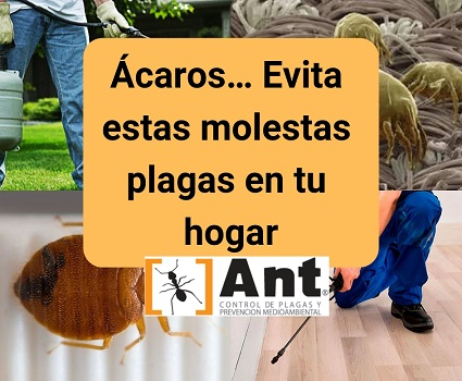 Ácaros… Evita estas molestas plagas en tu hogar