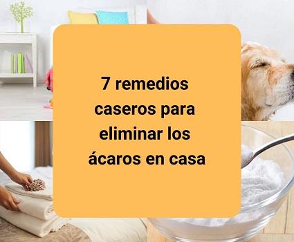 7 remedios caseros para eliminar los ácaros en casa