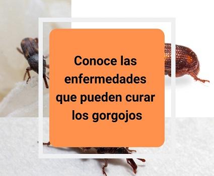 Conoce las enfermedades que pueden curar los gorgojos