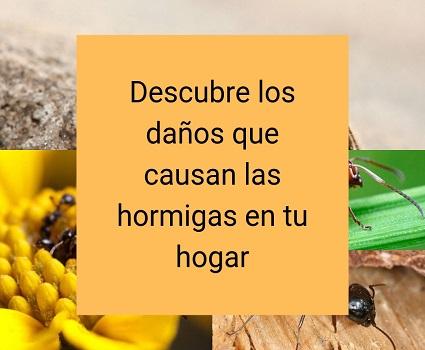 Descubre los daños que causan las hormigas en tu hogar