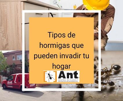 Tipos de hormigas que pueden invadir tu hogar