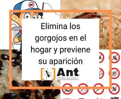 Elimina los gorgojos en el hogar y previene su aparición