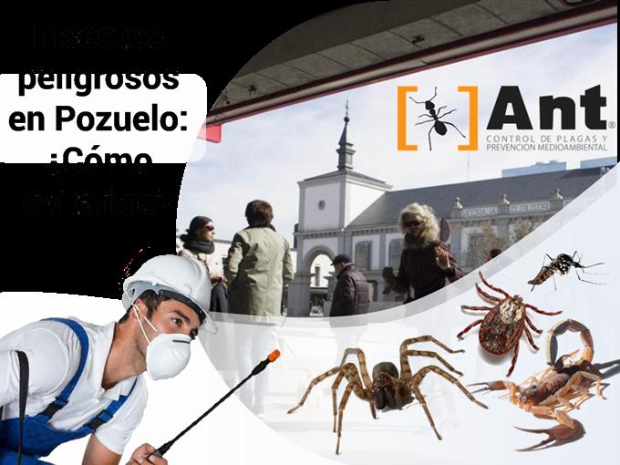 Insectos peligrosos en Pozuelo: ¿Cómo evitarlos?