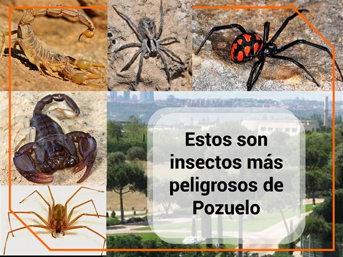 Estos son insectos más peligrosos de Pozuelo